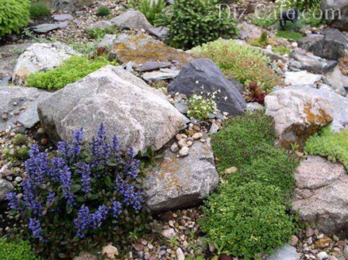 Как выбрать камни и флору для альпинария 359