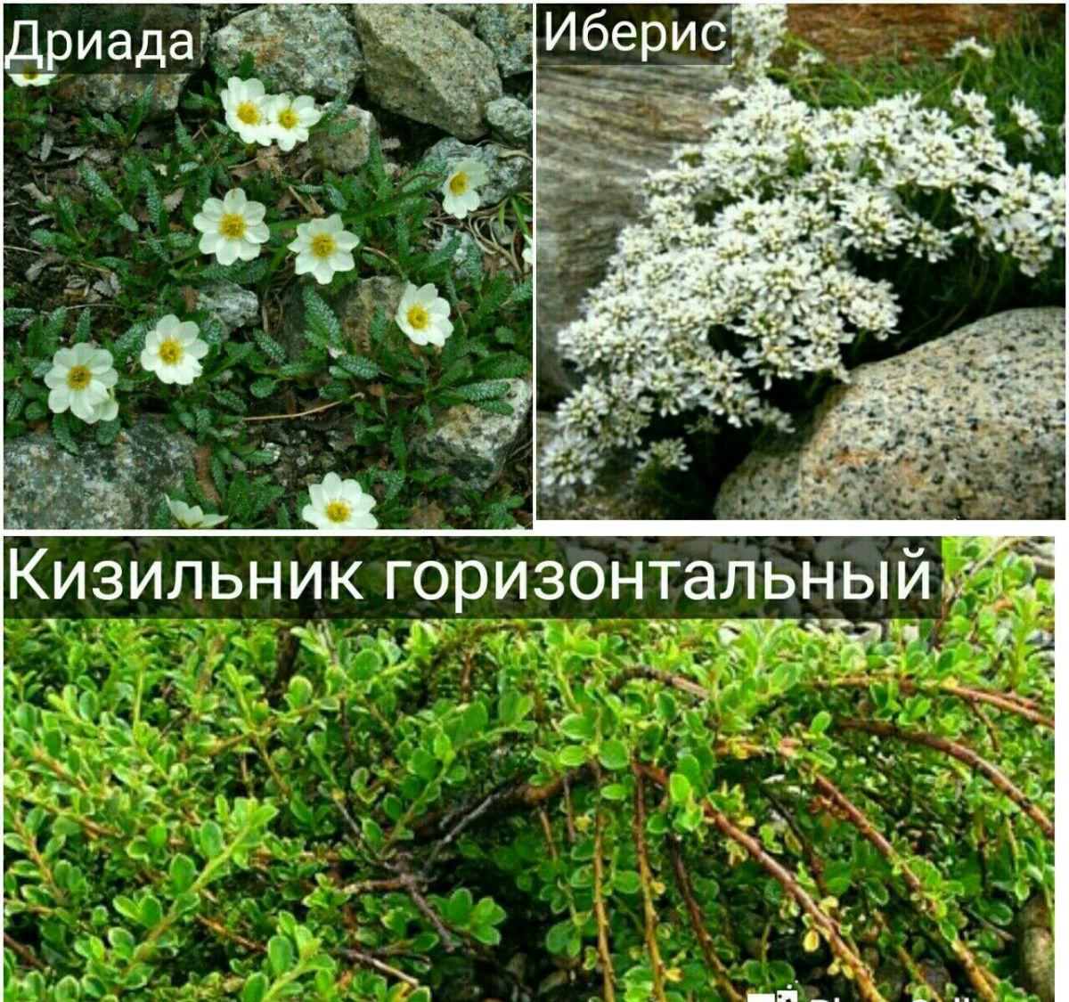 Как выбрать камни и флору для альпинария 360