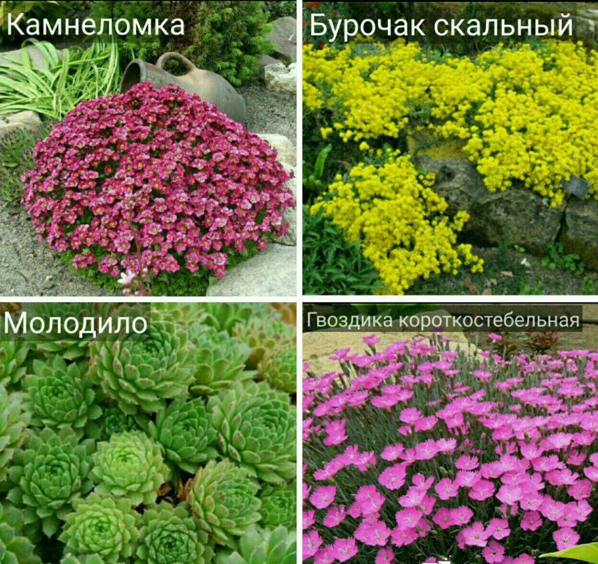 Как выбрать камни и флору для альпинария 361
