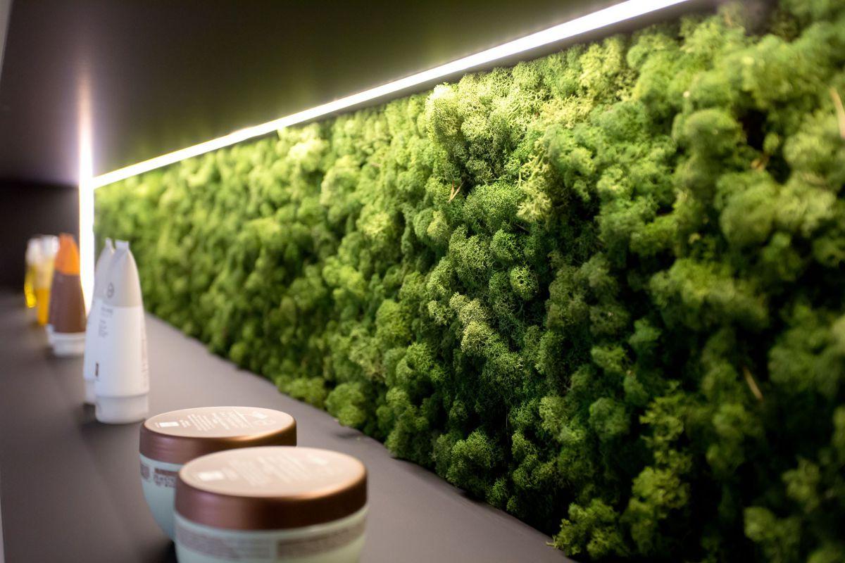 Стабилизированный мох: фото