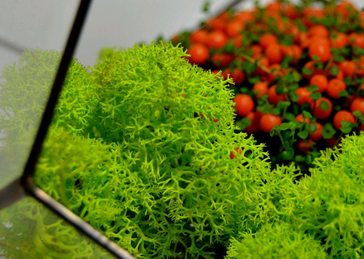 Стабилизированный мох в интерьере 2131