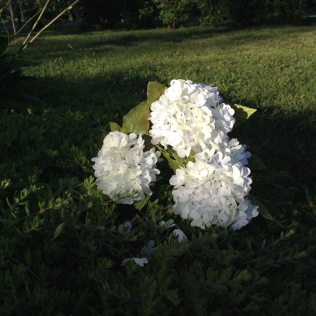 Цветы в интерьере. О фитодизайне 4693