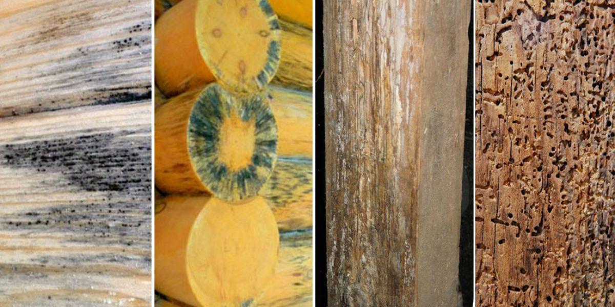 Антипирен для древесины 5145
