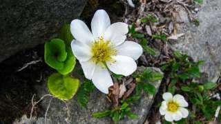 Как выбрать камни и флору для альпинария