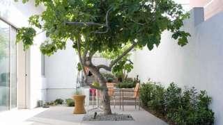 Дерево внутри дома