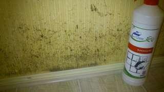 Средство от грибка на стенах