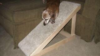 Лестница для собаки
